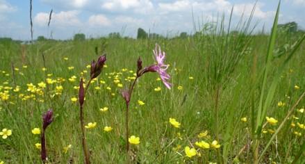 Onderzoek flora en fauna