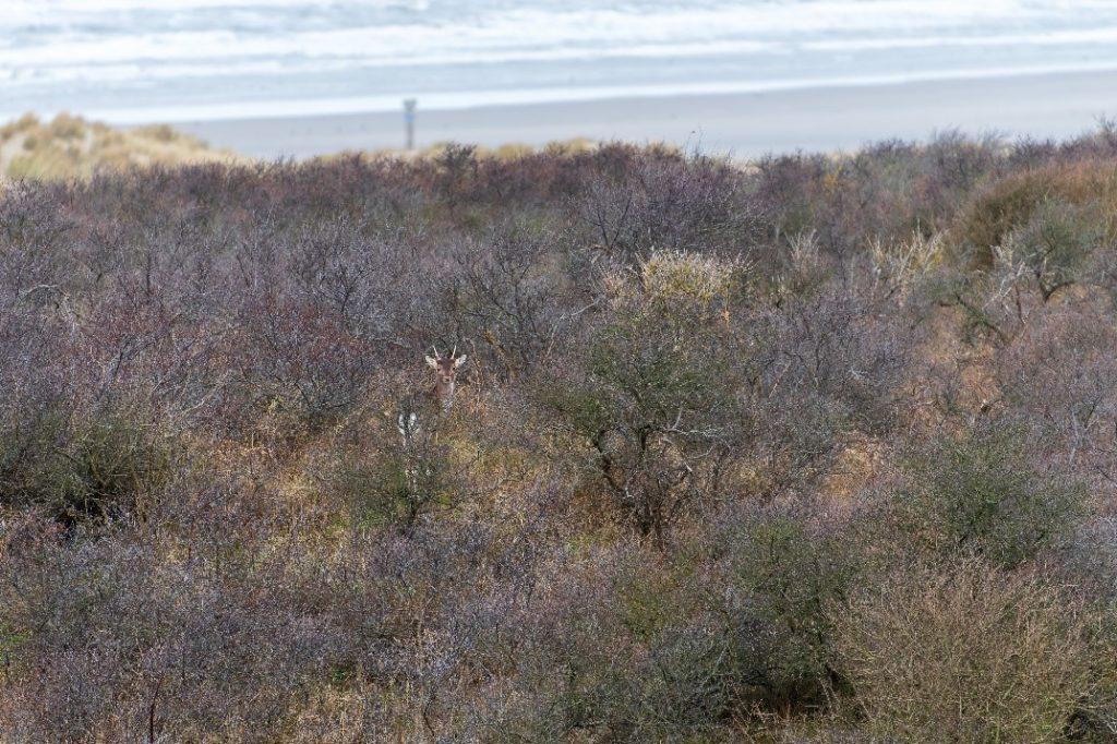 het opsporingsonderzoek trok de aandacht van dieren in de omgeving.