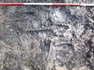 Foto met bijzondere vondst skelet